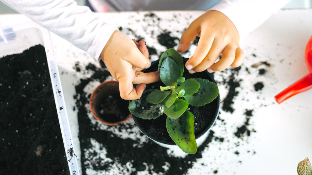 keeping plants can be healthy and fun